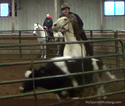 My Spanish Mustang cow clinic