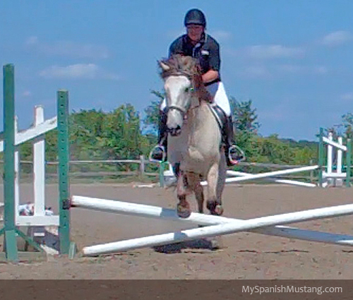 my-spanish-mustang-first-hunter-show-fences