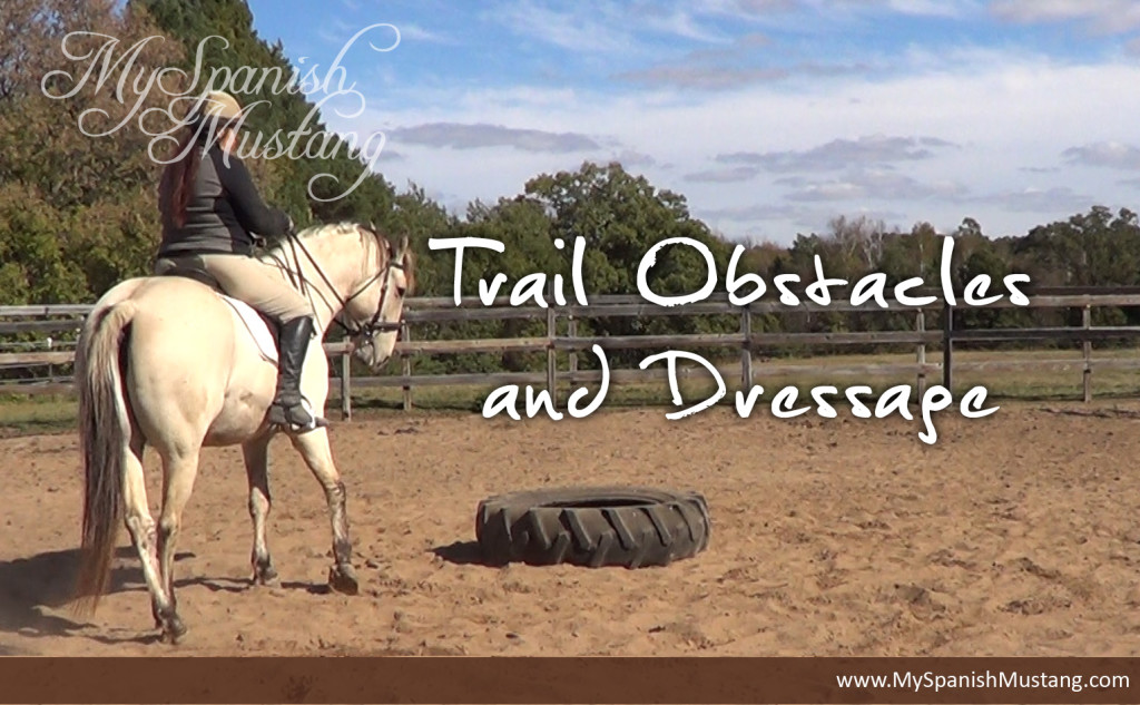 Trail Obstacles and Dressage