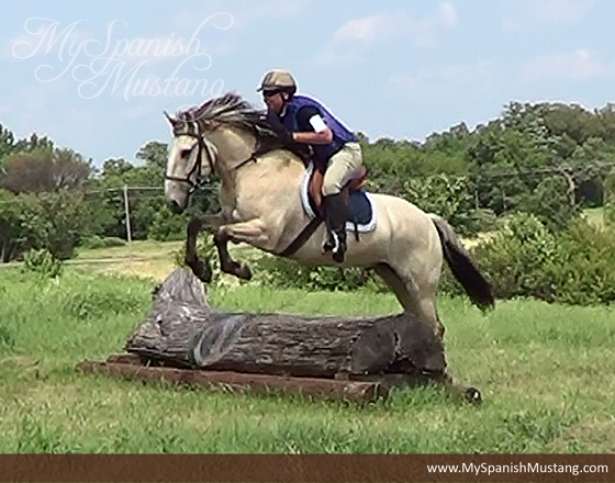 2014 SMR Performance Horse of the Year Indian's Legend Jumping a Log