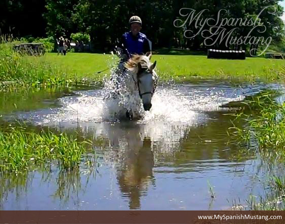 http://jenniferklitzke.com/myspanishmustang/wp-content/uploads/2015/11/2014-SMR-Performance-Horse-of-the-Year-Indians-Legend-Pig-Pond-Classic.jpg